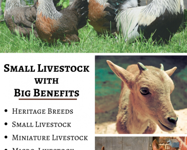 small livestock for small homesteads