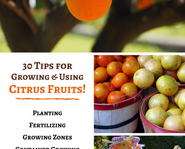30 Tips for Growing and Using Citrus Fruits