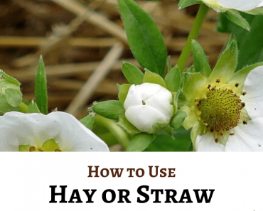 How to Use Hay or Straw in the Garden for Best Results