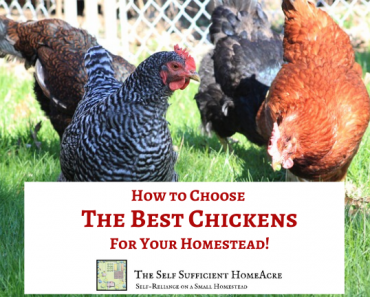 How to Choose the Best Chickens for Your Homestead