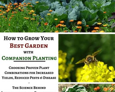 How to Grow Your Best Garden with Companion Planting