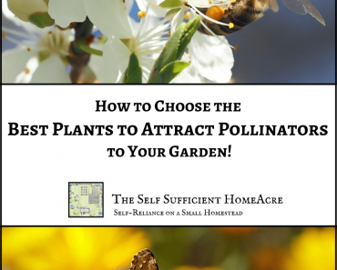How to Choose the Best Plants to Attract Pollinators
