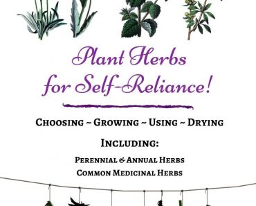 How to Increase Self-Reliance by Growing Herbs