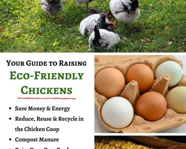Eco-friendly chickens