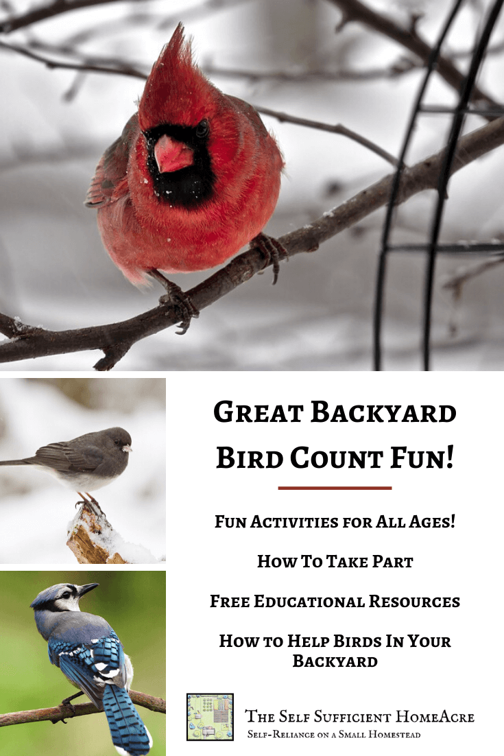 How to Be a Part of the Great Backyard Bird Count - The ...