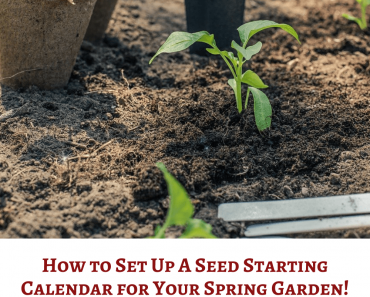 How to Set Up a Seed Starting Calendar