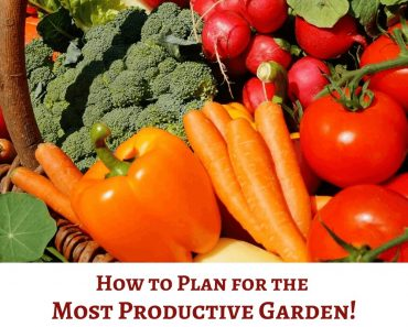 How to Plan for the Most Productive Garden