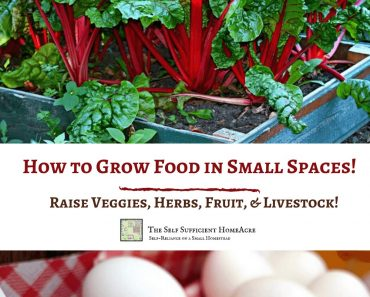 How to Grow Food in Small Spaces