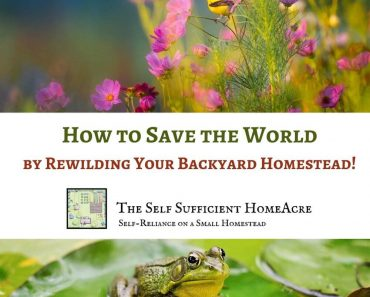 How to Save the World by Rewilding Your Backyard