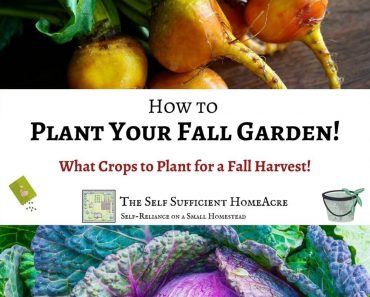 How to Plant Your Fall Vegetable Garden