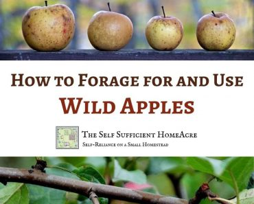 How to Forage for and Use Wild Apples