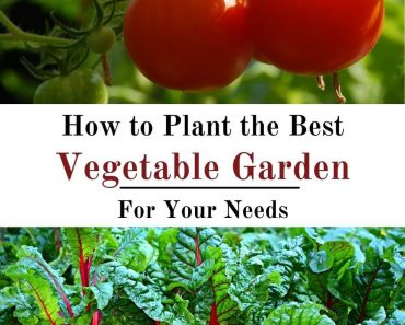 How to Plant the Best Vegetable Garden for Your Needs
