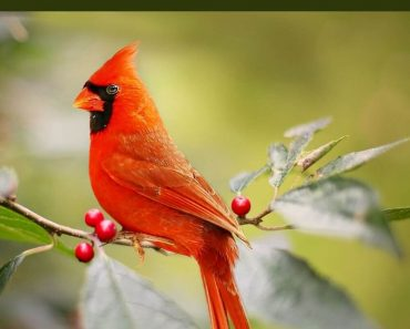 Take Part in the Great Backyard Bird Count