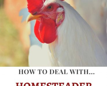 How to Deal with Homesteader Burnout