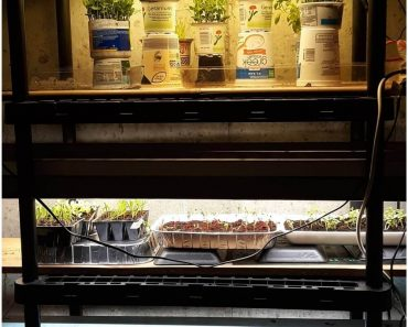 How to Save Money with an Easy Seed Starting Station