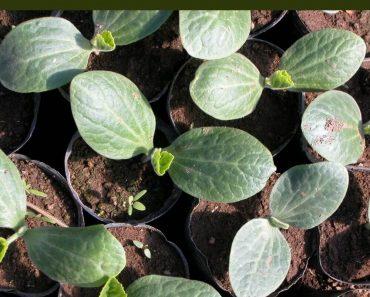 How to Start the Best Seedlings Indoors for Your Garden