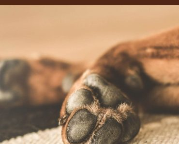 Make a Soothing Balm for Your Pet's Paws