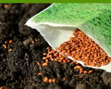 tips to speed seed germination