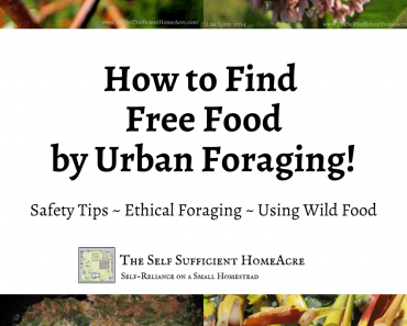 How to Find Free Food by Urban Foraging